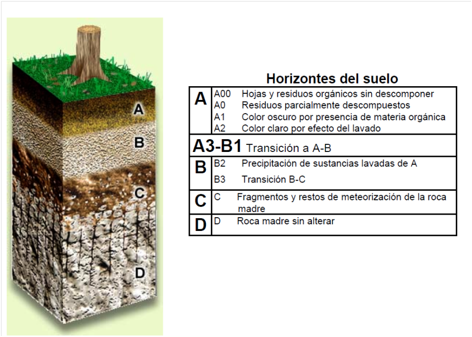 INFLUENCIA DE LOS SUELOS EN LOS BOSQUES TROPICALES ~ Bosque Tropical