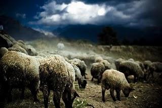 Penggembala Domba di Akhir Zaman
