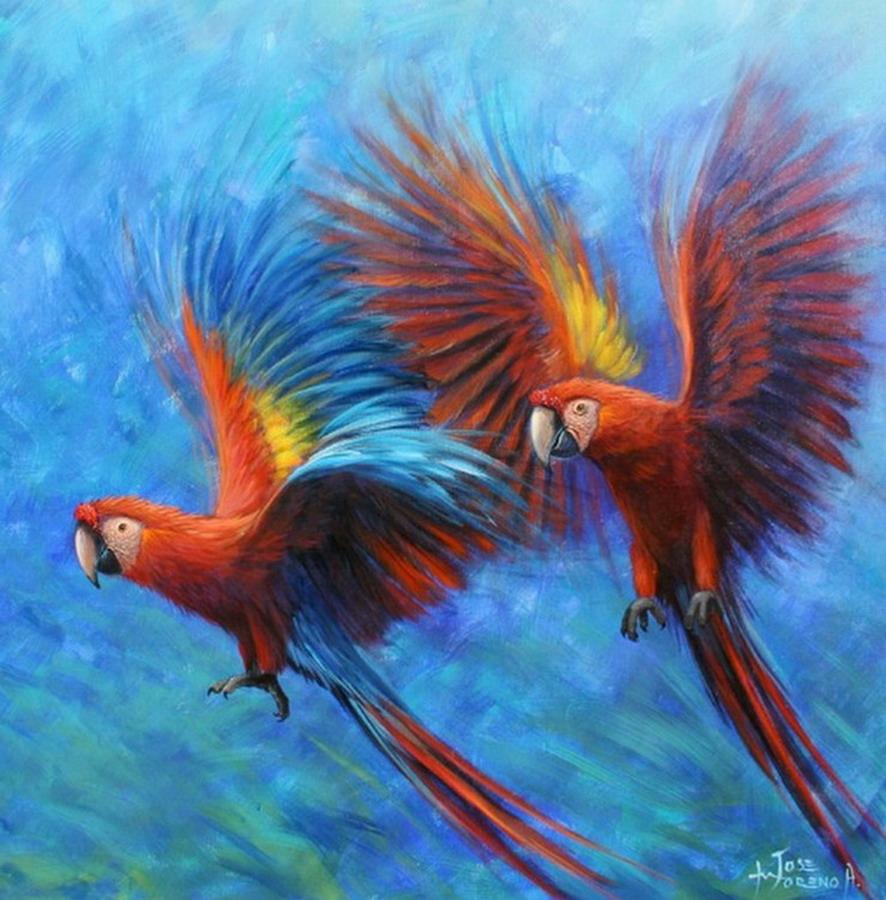 Cuadros modernos pinturas y dibujos cuadros de p jaros de colores vivos arte en im genes - Cuadros de colores ...