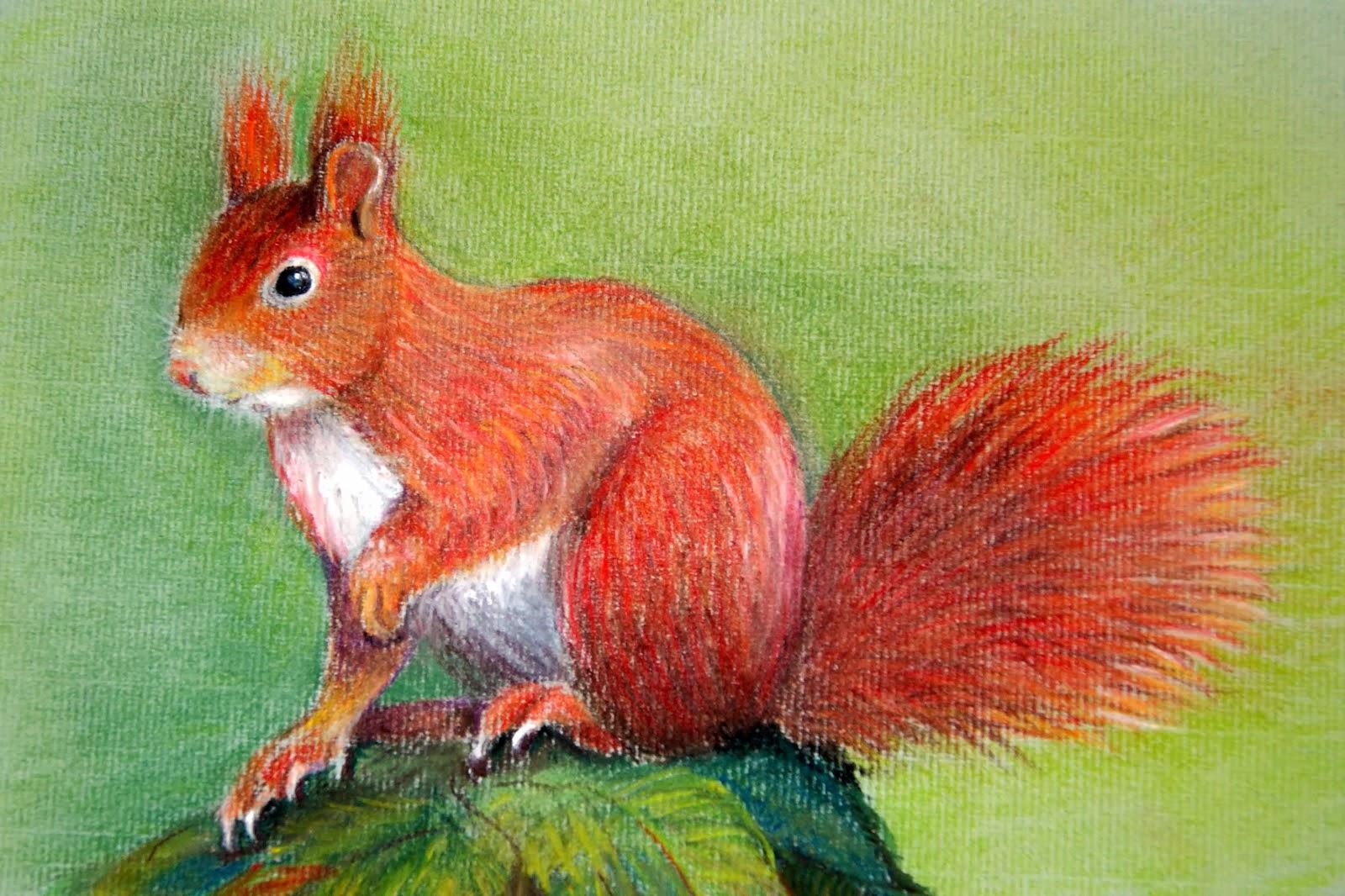 Eekhoorn (pastel)