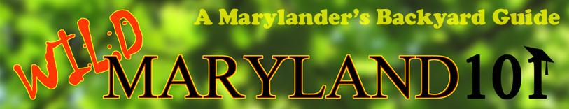 Wild Maryland 101