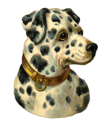 Free Image Dog Dalmation