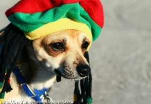 Funny dog.