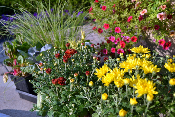 Planting mums: Wheelbarrow Planter | DIY Playbook
