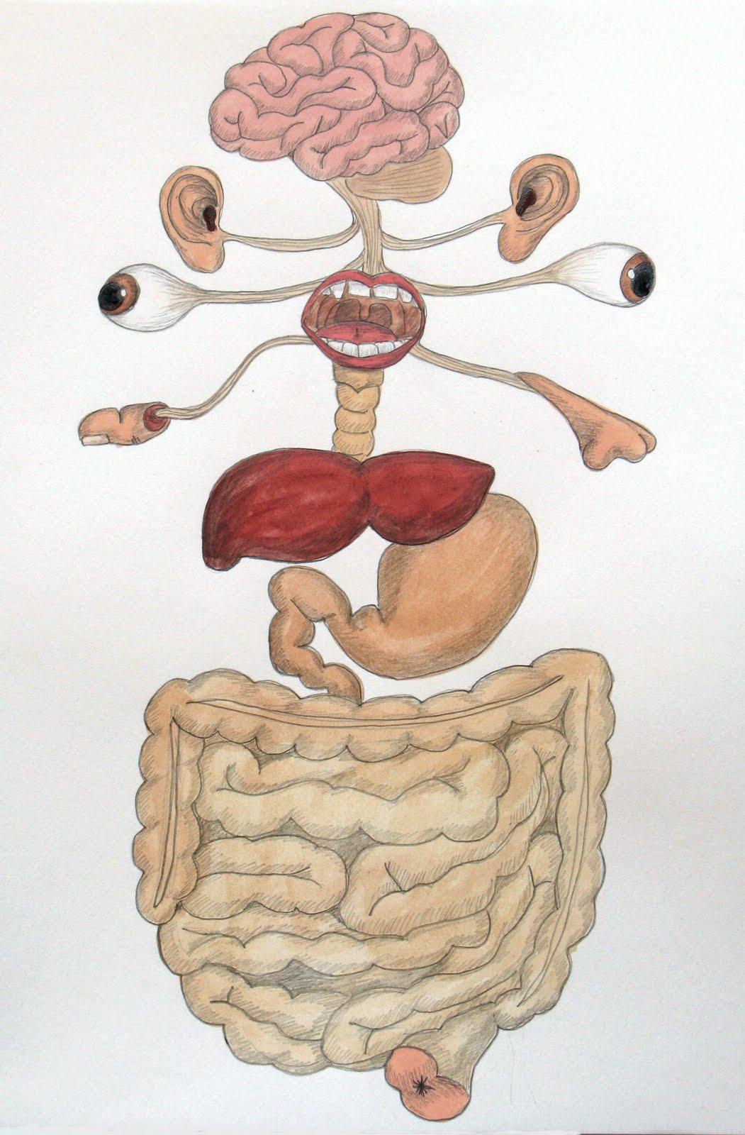 El sistema y el aparato digestivo - Taringa! - HD Wallpapers: http://www.liupis.com/el/el-sistema-digestivo-i-ilustrados.html