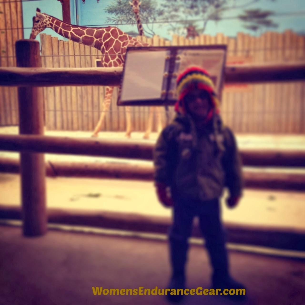 Giraffes at Brookfield Zoo
