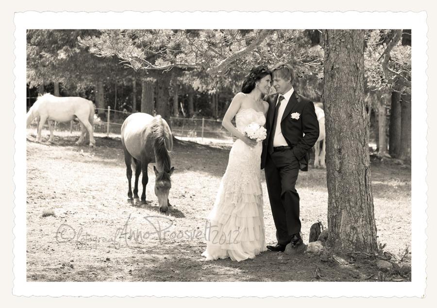 pulmafoto-vintage-hobustega