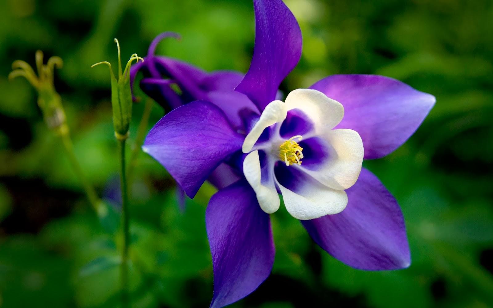 imagenes de flores claveles - Claveles: cultivo y cuidados Plantas facilisimo com