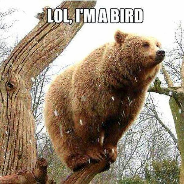 30 Funny animal captions - part 18 (30 pics), funny bear meme, lol i'm bird
