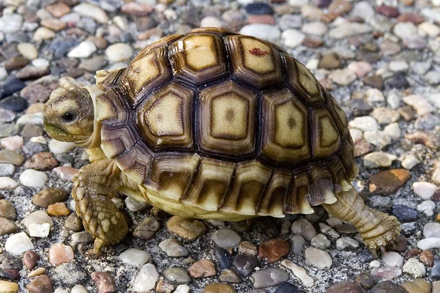 Tortoises pics and info | Animals Blog