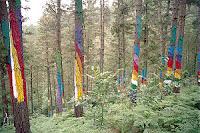 arbres peints d'ibarrola