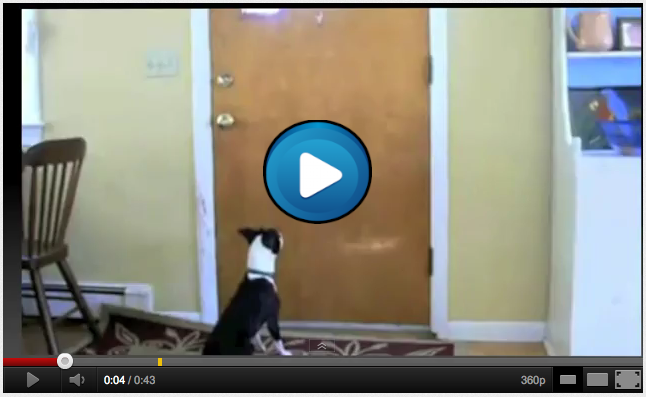 mail slot, mail delivery of how dogs and cats act upon insertion of the mail in the mail slot, cats and dogs gone wild and crazy attacking mail, mail delivery video