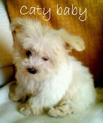 Mi perrita Caty