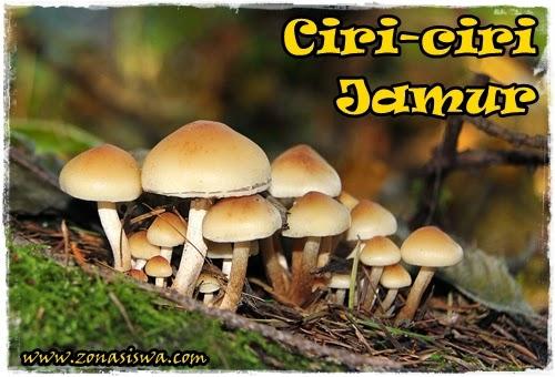 Ciri-ciri Jamur | www.zonasiswa.com