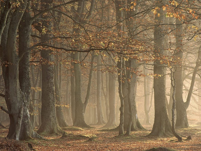 Paisajes de Bosques y Selvas