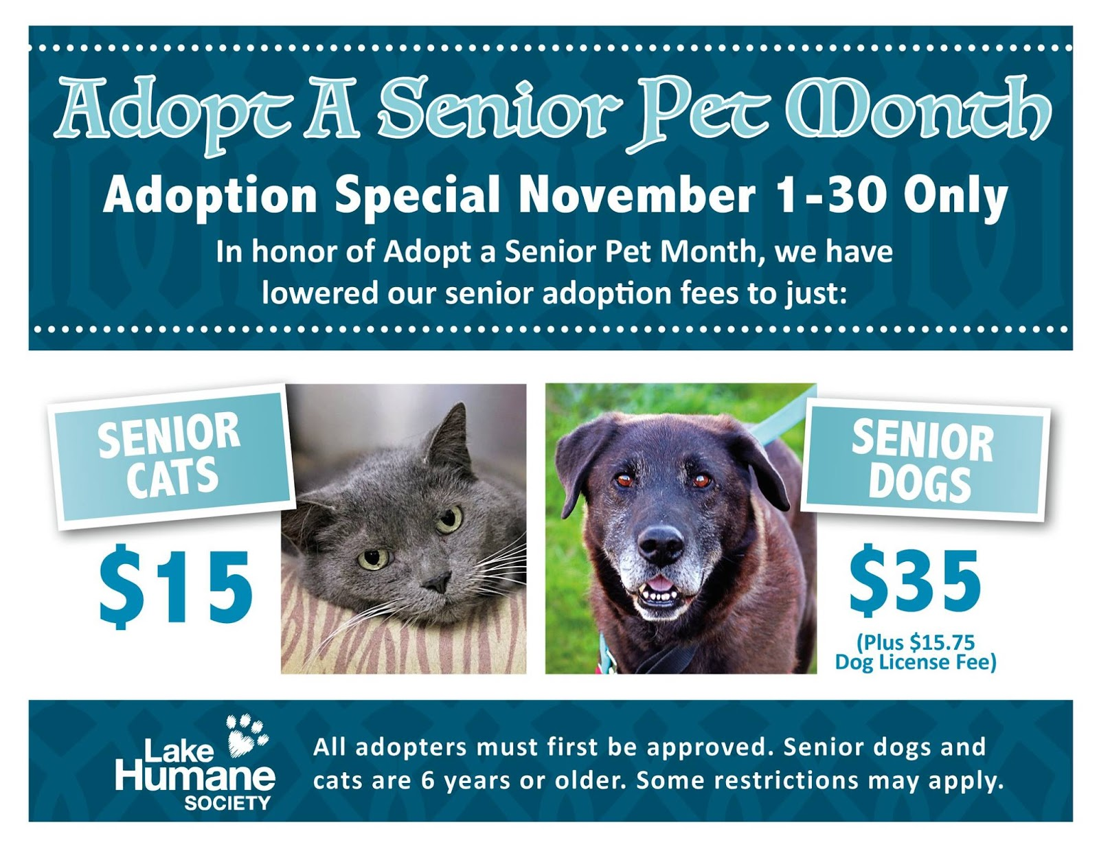 how to choose a pet for a senior