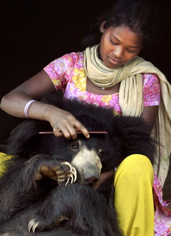 Sloth bear pet in India, Kisan's family member combs Buddu's hair