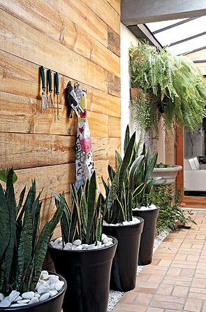 jardim vertical samambaias e espada de são jorge