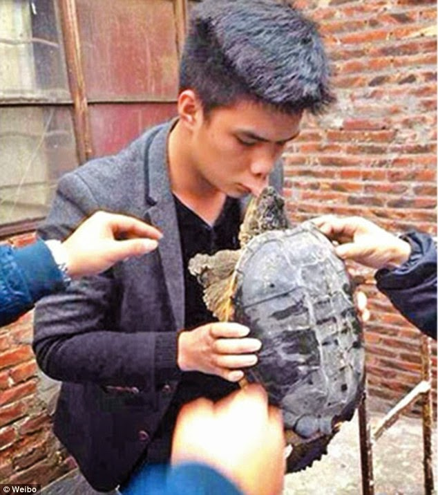 Akibat mencium kura-kura