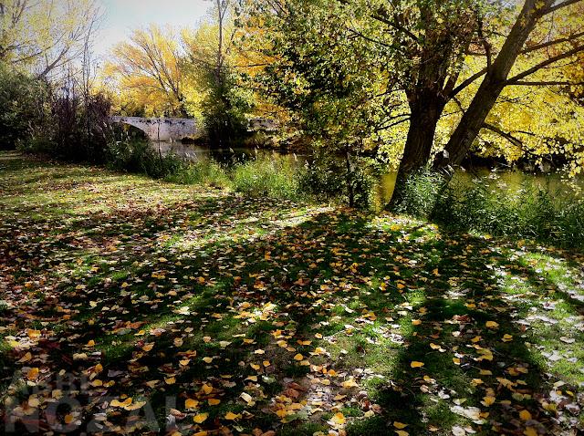 Puentecillas en otoño, 2012 (cc) Abbé Nozal