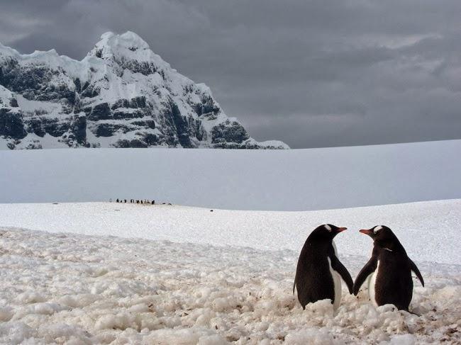 Я сделал этот снимок в Порт Локрой во время моей поездки по Антарктиде в 2010 году. Два пингвина на фоне величественного пейзажа создали потрясающую картину. © Мариус Илиеш