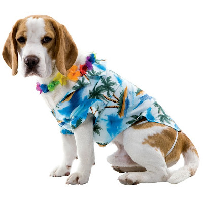 Target tuesday halloween party my mini adventurer another dog costume dog tourist you could also easily make this one yourself solutioingenieria Gallery
