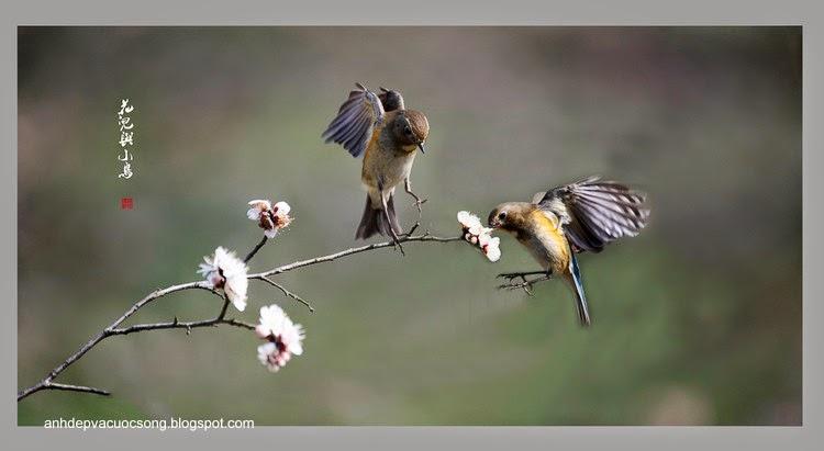 Những chú chim tung tăng ngày nắng ấm 6