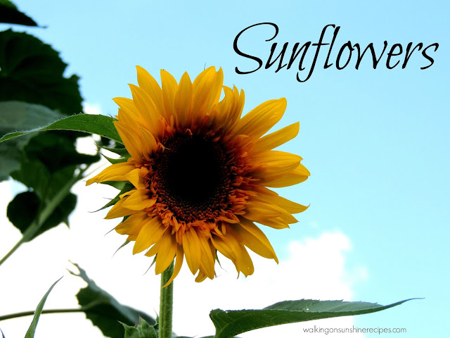 Sunflowers are one of my favorite summer flowers.