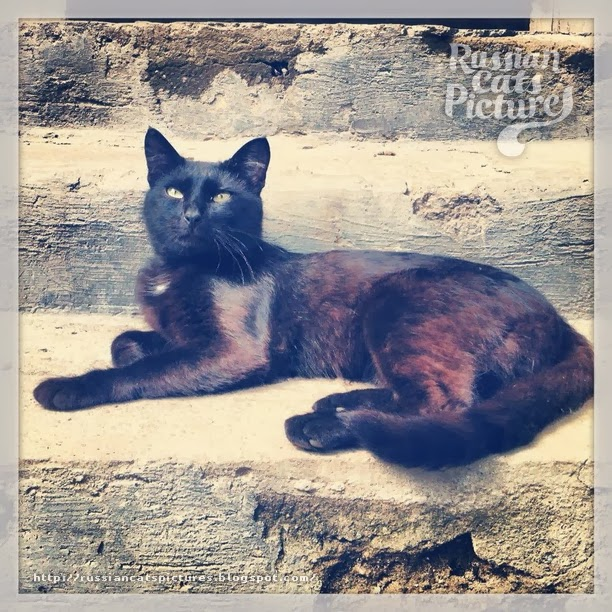 Instacats: Second Coming — Part Two Cat 09