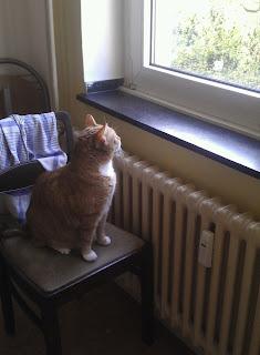 Katze, Cat, Katze die aus dem Fenster guckt