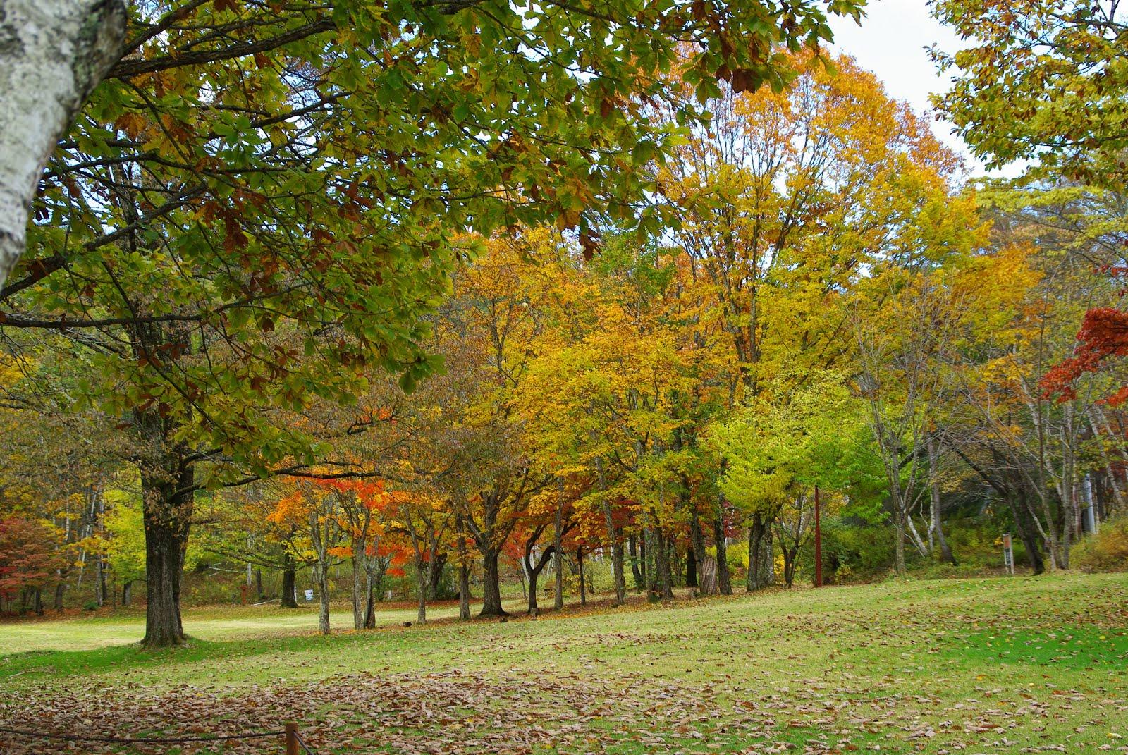 秋の隠れスポット