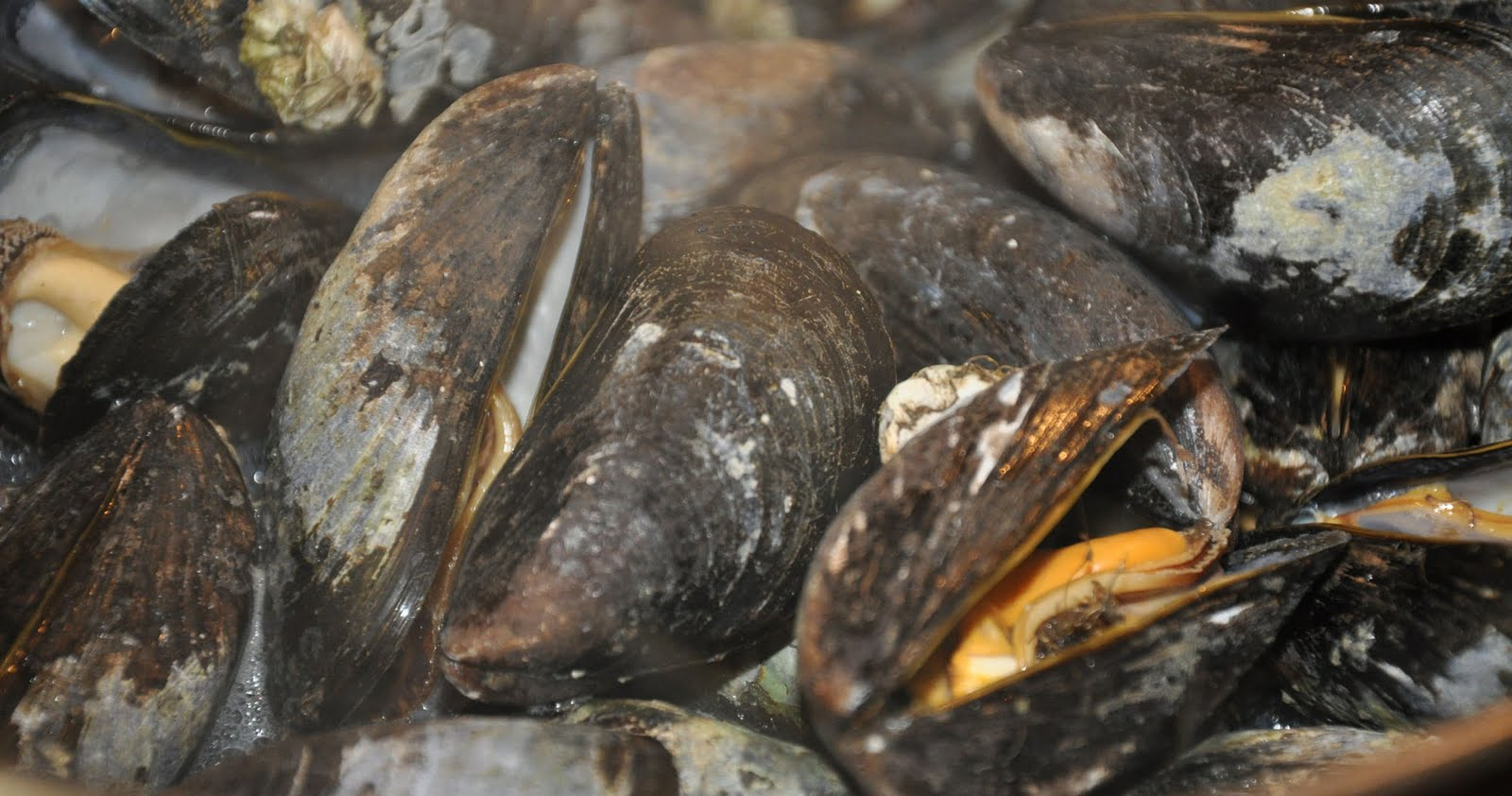 Fire and Food: Grilled Mussels with Garlic Butter and Parmesan