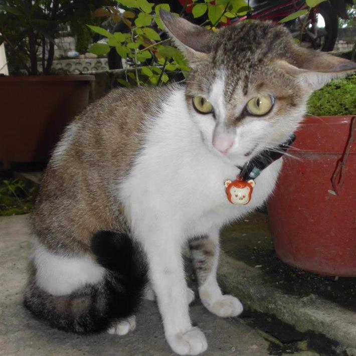 Djainoel Pets Accessories Cats Collar Kalung Kucing