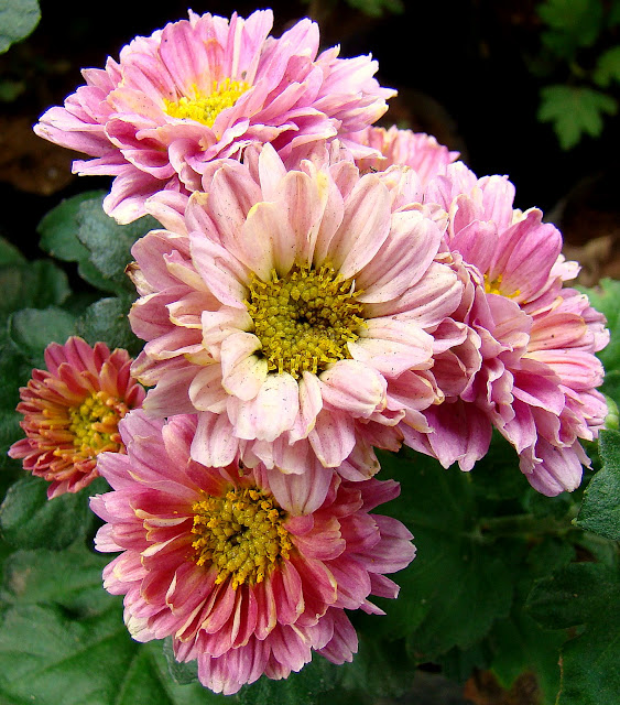 Discover srilanka sri lanka flowers