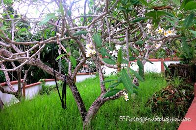 Kubur Syed Yasin