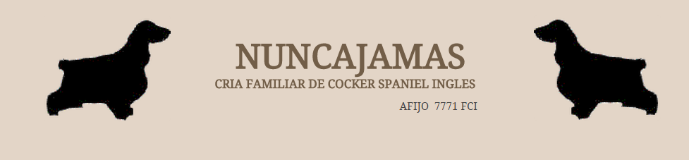 NUNCAJAMAS COCKER