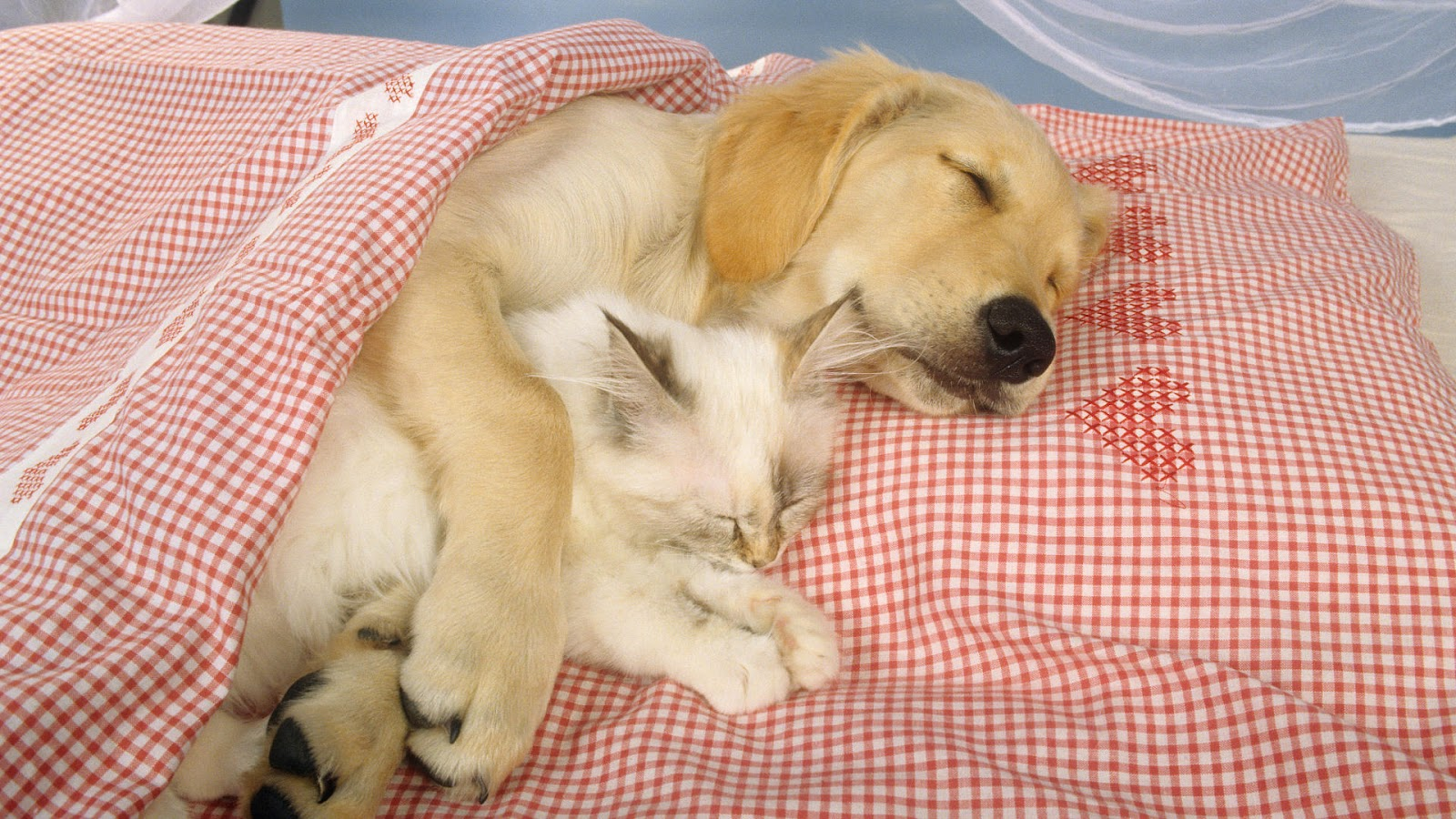 http://4.bp.blogspot.com/-69o26gX2Hbg/T1FWS5fpXbI/AAAAAAAAEAk/gXJMOWf-Q-Q/s1600/a_cat_and_dog_sleeping_together_in_a_bed_with_the_dogs_paws_wrapped_around_the_cat.1920x1080.6d4087d2.jpg