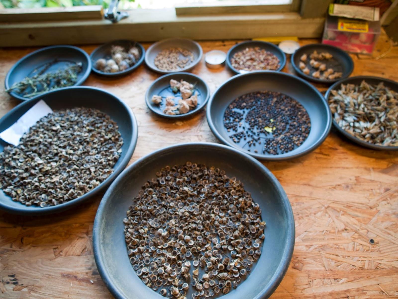 zaden verzamelen ruilen biodiviersiteit