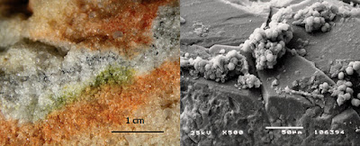 http://www.agenciasinc.es/en/News/Antarctic-fungi-survive-Martian-conditions-on-the-International-Space-Station
