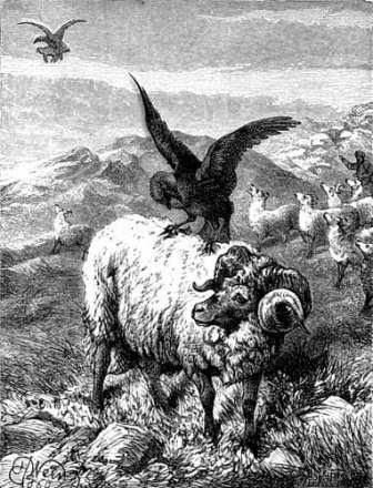 Image Result For Cerita Burung Elang Dan Gagak