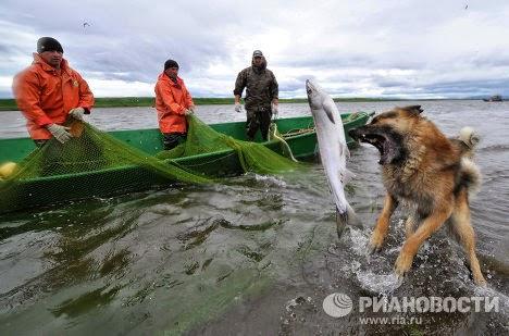 Chó bắt cá