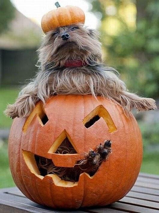 Funny halloween animals2-6