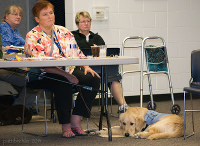 Now the golden retriever is lying down facing the camera, with his nose to the floor. In this picture you can see two other women sitting behind Dutch's handler.