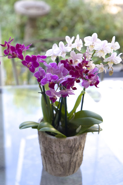 Settle orchids into planter; How to Landscape an Orchid; Nora's Nest