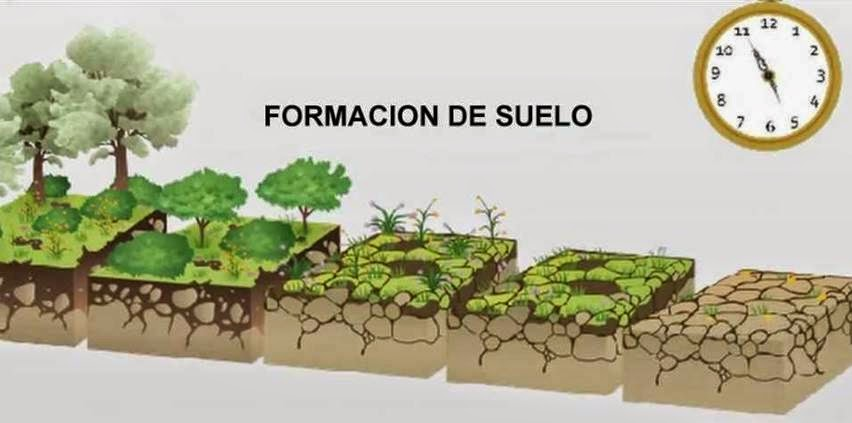 Huerto del miguel catal n formaci n de suelos for Formacion de los suelos