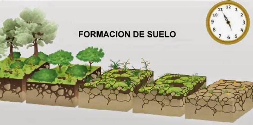 Huerto del miguel catal n marzo 2015 for Proceso de formacion del suelo