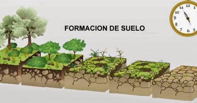 Huerto del miguel catal n formaci n de suelos for Proceso de formacion del suelo