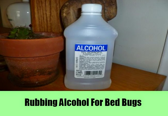 Can Spraying Alcohol Kill Bed Bugs