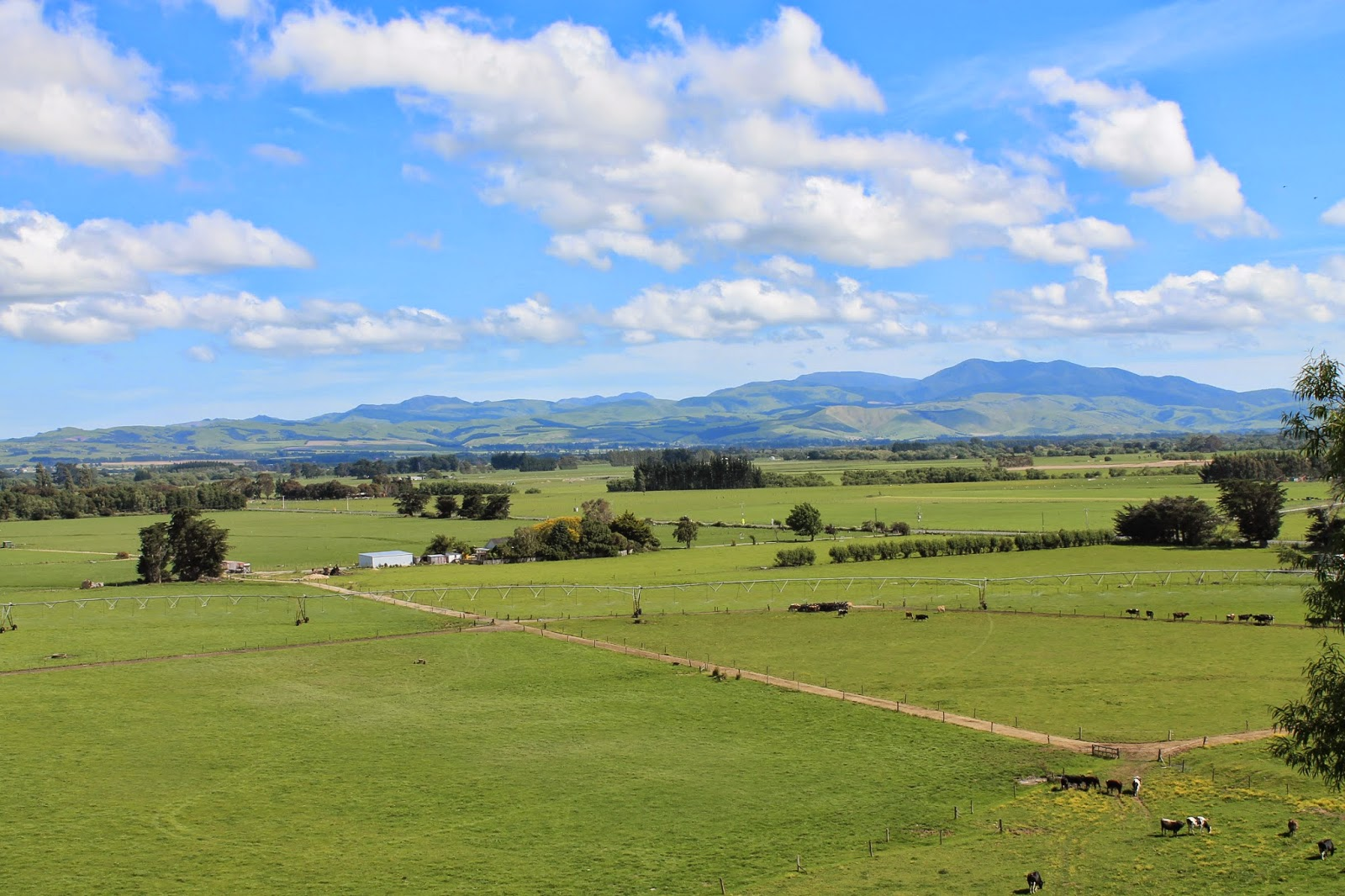 Scenic view of Martinborough