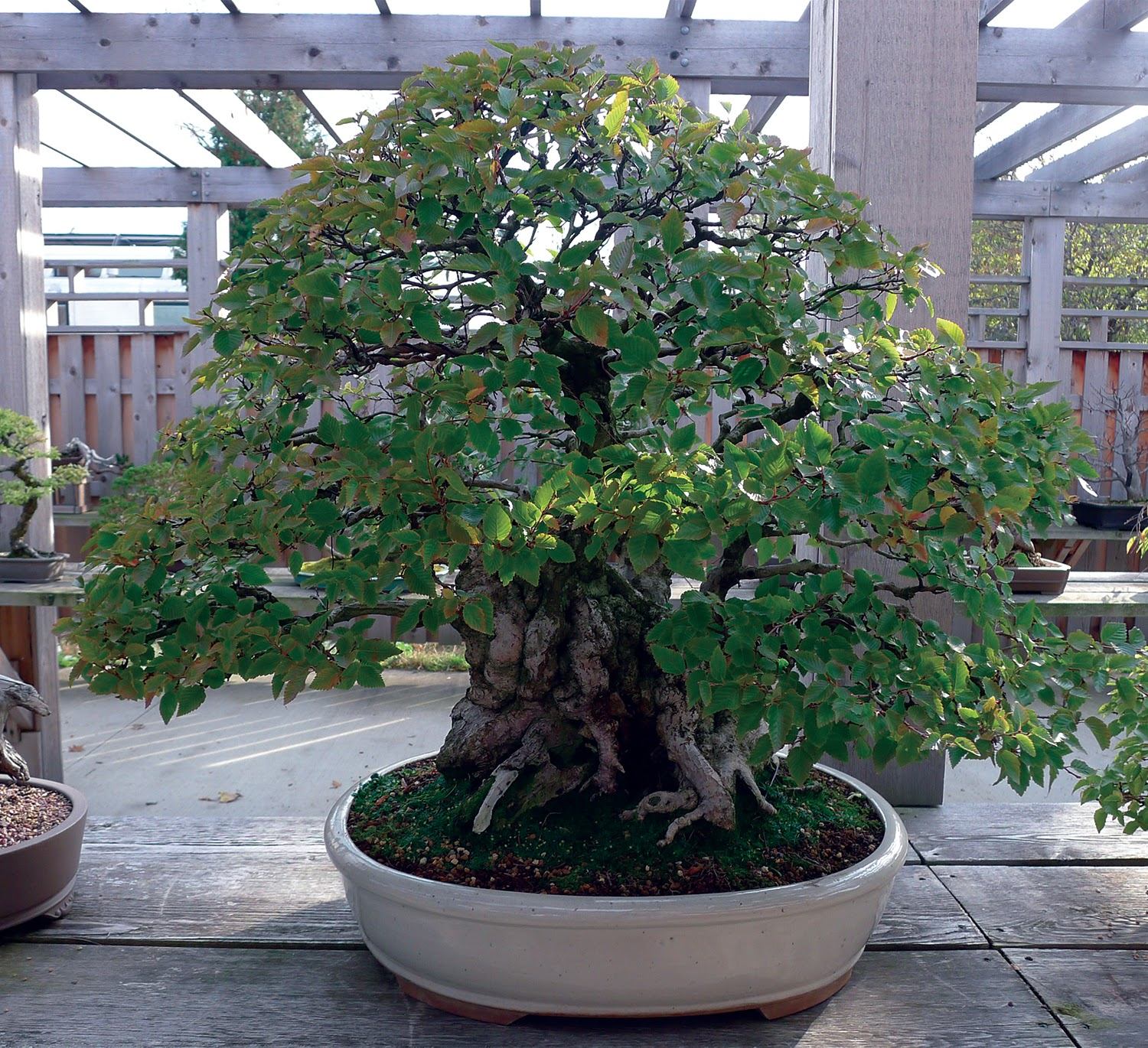 Earth Words A Gift Of Bonsai
